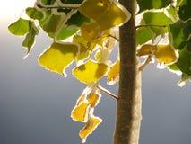 La glace a couvert l'arbre Photographie stock