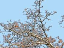 La glace a couvert l'arbre Photo stock
