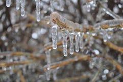 La glace a couvert les branches nues Photographie stock