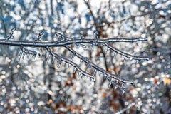 La glace de scintillement a couvert des branches Image libre de droits