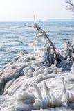 la glace a enduit des branches le long de rivage du lac Michigan dans les sous temp?ratures z?ro extr?mes image libre de droits