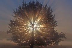 La gloire de indication de Dieu ! 3 Image libre de droits