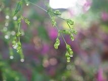 La goccia di acqua dal piccolo fiore Immagine Stock