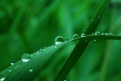 La goccia di acqua sul foglio verde Fotografie Stock Libere da Diritti