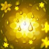 La goccia di pioggia mostra la fioritura floreale ed il petalo Fotografia Stock