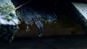 La goccia sta cadendo dal vecchio tetto di legno Colpo con la macchina fotografica in tensione immagini stock