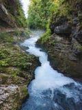 La gola di Vintgar ed il fiume di Radovna con la traccia di escursione vicino hanno sanguinato, la Slovenia Fotografia Stock
