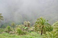La Gomera dans les nuages Photos stock