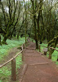 La Gomera - Hiking trail in the National Park Garajonay Royalty Free Stock Photo