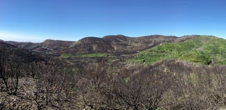La Gomera - Landscape after the fire in 2012 Royalty Free Stock Photography