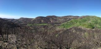 La Gomera - Landschap na de brand in 2012 Royalty-vrije Stock Fotografie
