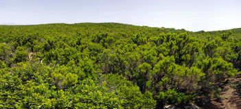 La Gomera Mirador de Alojera, canarino Fotografia Stock Libera da Diritti