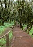 La Gomera - pista de senderismo en el parque nacional Garajonay Foto de archivo libre de regalías