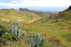 LA GOMERA, SPANIEN: Gräsplan och bergigt landskap nära Alajero med aloeVera växter i förgrunden Royaltyfria Foton
