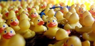 La gomma ducks il nuoto immagini stock
