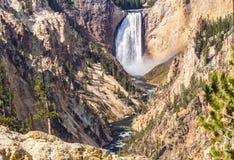 La gorge grande de Yellowstone Photographie stock
