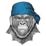 La gorilla, scimmia, imita l'immagine d'uso della bandana o della bandana o del bandanna dell'animale selvatico animale spaventos Immagini Stock