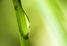 La gotita de agua se cierra extremadamente para arriba en hierba Imagen de archivo