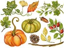 La gouache colorée Autumn Fall d'aquarelle s'embranche avec des feuilles et illustration stock