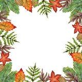 La gouache dell'acquerello che disegna i rami variopinti delle foglie ha messo del autum Illustrazione di Stock