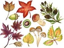 La gouache variopinta Autumn Fall dell'acquerello si ramifica con le foglie e Royalty Illustrazione gratis