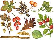 La gouache variopinta Autumn Fall dell'acquerello si ramifica con le foglie e Illustrazione Vettoriale