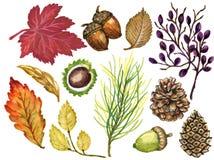 La gouache variopinta Autumn Fall dell'acquerello si ramifica con le foglie e Illustrazione di Stock