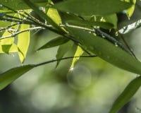 La gouttelette de pluie brille lumineux comme un diamant Photographie stock
