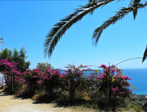 La Grèce, île Skiathos Image stock