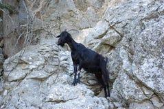 La Grèce, chèvre de rocheux-montagne de Rodos image libre de droits
