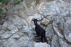 La Grèce, chèvre de rocheux-montagne de Rodos photos stock
