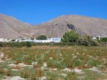La Grèce, Santorini, tomates-cerises locales, agriculture Images stock