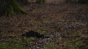 La grêle, sèchent les feuilles et le sol banque de vidéos