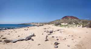 La Graciosa - lös sandstrand på Playa Francesa Arkivbilder