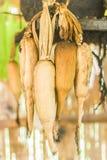 La graine de maïs images libres de droits