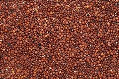 La graine rouge organique Chenopodium quinoa de quinoa dans le plein avion de cadre a écarté la forme Image stock