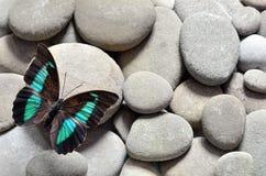La gran mariposa en piedras Fotografía de archivo libre de regalías