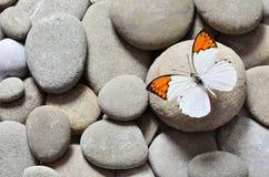 La gran mariposa en piedras Imágenes de archivo libres de regalías