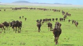 La gran migración en Serengeti