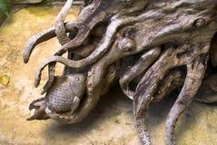 La gran raíz Sculpt Fotografía de archivo libre de regalías