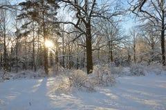 La gran vista de las cubiertas del bosque por la nieve imagen de archivo libre de regalías