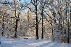 La gran vista de las cubiertas del bosque por la nieve fotografía de archivo