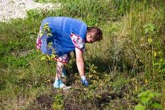 La grand-mère arrache l'herbe dans le jardin Image libre de droits