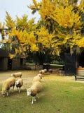 La grande évasion de moutons Images stock