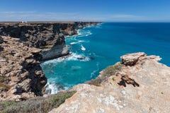 La grande ansa australiana sull'orlo della pianura di Nullarbor Immagine Stock