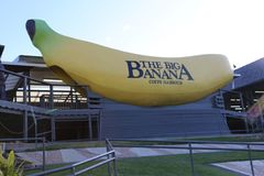 La grande banane, Coffs Harbour Image stock