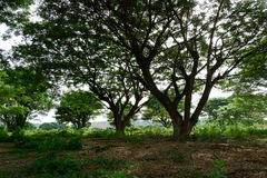 La grande branche d'arbres Images stock