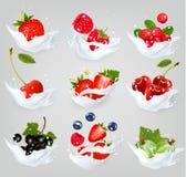 La grande collection d'icônes de fruit et les baies dans un lait éclaboussent Photos libres de droits