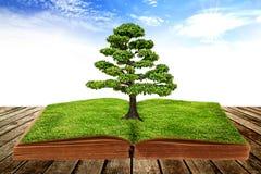 La grande crescita dell'albero da un libro Fotografia Stock Libera da Diritti