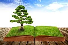 La grande crescita dell'albero da un libro Fotografie Stock Libere da Diritti